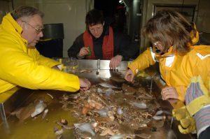 Meeresforscher bei der Arbeit